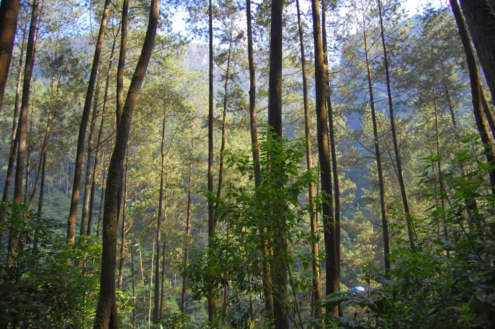 1.mari-berpetualang-seru-di-taman-hutan-raya-juanda1